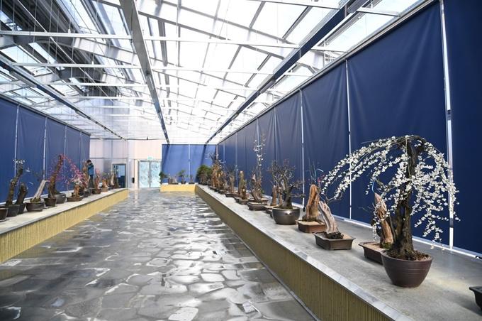 45c38183018 영주시가 지난 2월 일반에 공개한 한국문화테마파크 내 매화공원의 매화분재 전시장. 영주시 제공