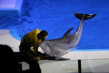 계약 끝나가는데… 돌고래 '태지' 앞날은?