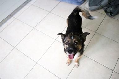 고가도로서 구조된 후 5년째 보호소에 있는 개