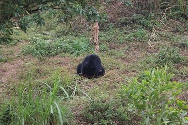 베트남 반달가슴곰 보호구역 '지역 관광ㆍ교육 연계' 상생모델 보여줘