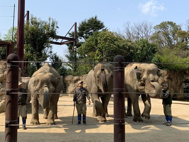 모두 즐거워만 하는 코끼리 쇼, 나만 불편?