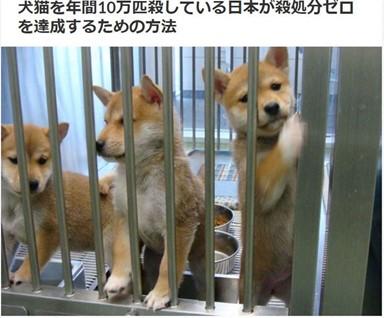 유기동물 살처분 줄여가는 일본, 늘어난 한국
