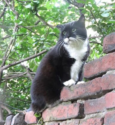 부디 '백만 번째 삶'을 살았던 고양이기를