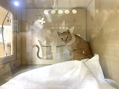 500원짜리 동전만한 길고양이 '여리'의 목숨