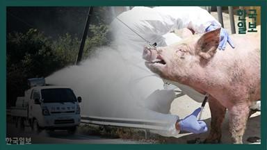 방역망 비웃는 돼지열병…  이천·안성은 사수할까