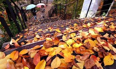 가을 '찰칵'