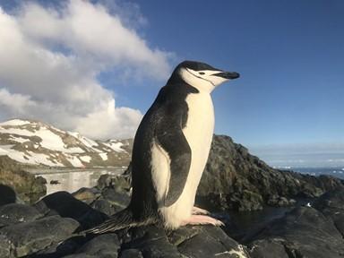 '펭하!' 12월 남극은 펭귄이 알에서 깨어나는 시간