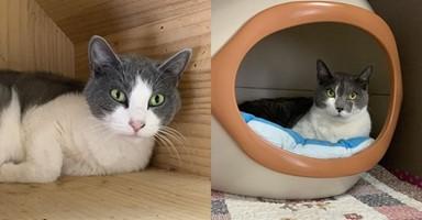 가족 해체로 2년 만에 버려진 고양이 남매