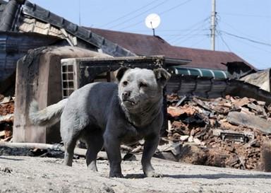 고성 산불 1년, 살아남은 동물들