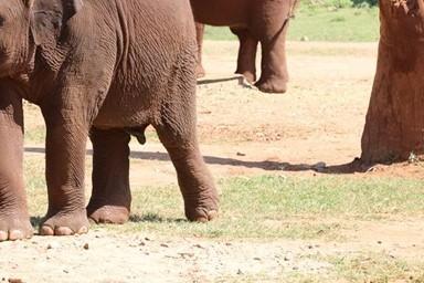 학대받았던 90여마리 코끼리들의 '실버타운'