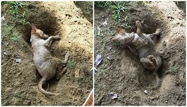 흙구덩이 속 강아지 주인 놀라게 만든 사진