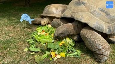 100살 생일 맞은 어르신 거북이 '투키'